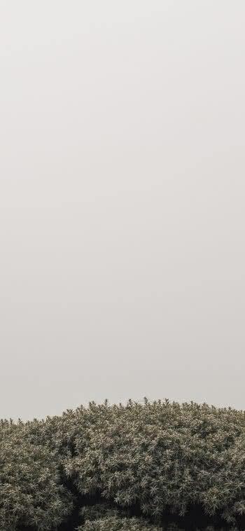 Iphone Wallpaper Hd Download Für Alle Modelle Kostenlos