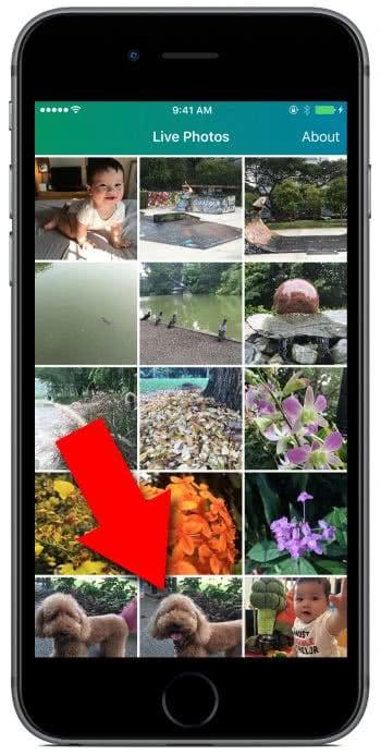 Live Photos exportieren als GIF
