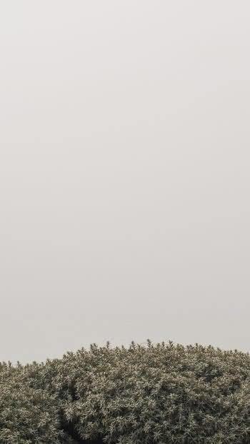 iPhone-Plus-wallpaper-9