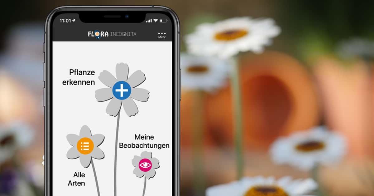 Pflanzen Erkennen Per App Mit Dem Iphone So Gehts