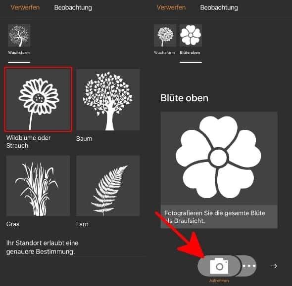 Pflanzenart auswählen und fotografieren in der Flora Incognita App auf dem iPhone