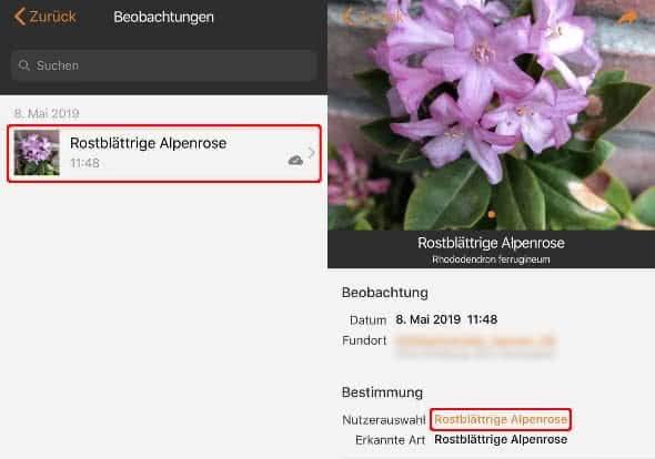 Beobachtungen ansehen in der Flora Incognita App auf dem iPhone