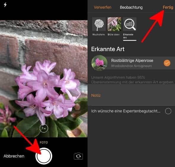 Pflanze fotografieren und bestimmen in der Flora Incognita App auf dem iPhone
