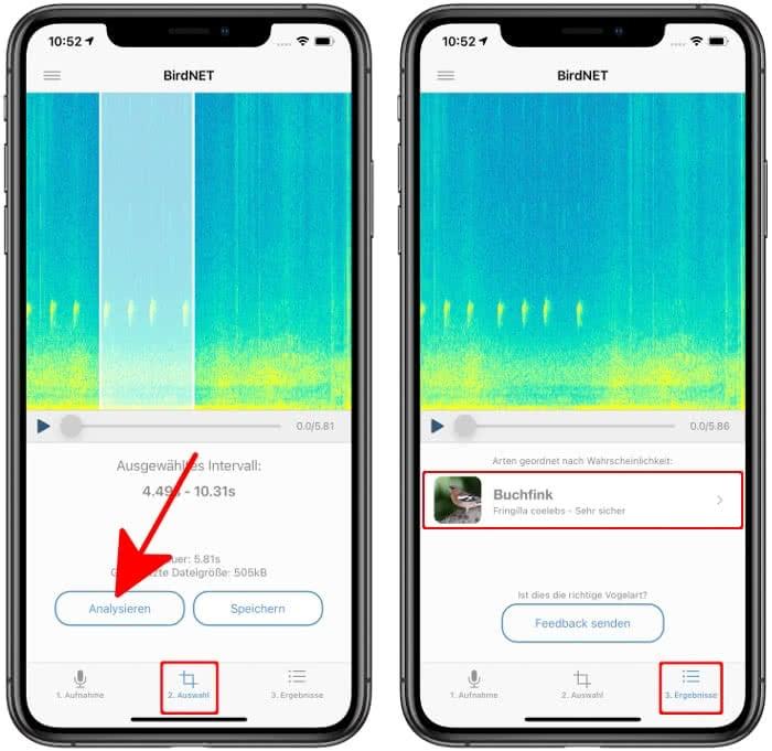 Vogelstimme analysieren in der BirdNET-App